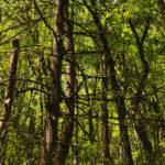 Kimsey Creek Trail (2)
