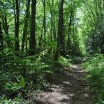 Park Ridge Trail