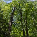 Park Ridge Trail (2)