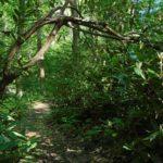 Path at Loop5