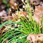 Wildflower 9