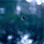 spider & web 4x6