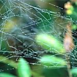 web2 4x6