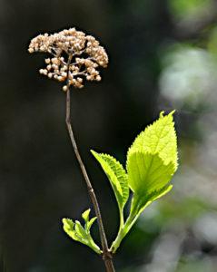 wildflowers 047