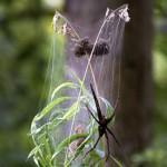 9010 Spider