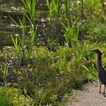 Greenway walker