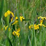 Yellow Flag