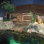Shark lagoon topside