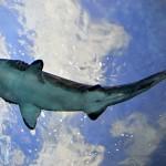 ripleys aquarium 117 copy