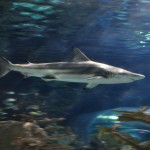ripleys aquarium 127