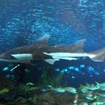 ripleys aquarium 167