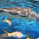 ripleys aquarium 169 copy