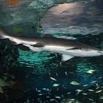 ripleys aquarium 176 copy