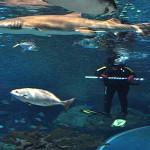 ripleys aquarium 187 copy