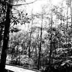 cradleofforestry 085