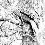 cradleofforestry 091 copy